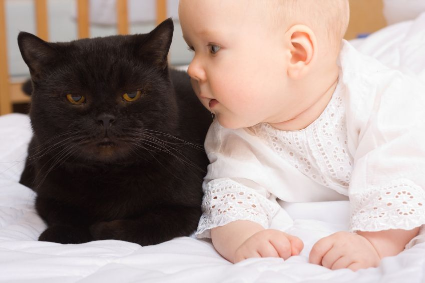 cat care cats and babies 2