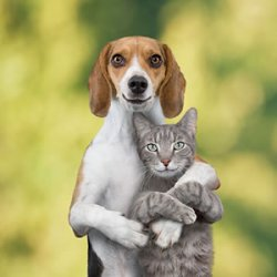Cats and Dogs - an essay