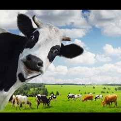 Real Meat is Green -  it Eats Grass