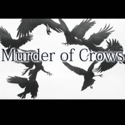 The Dawn Chorus of the sycophantic murder of crows