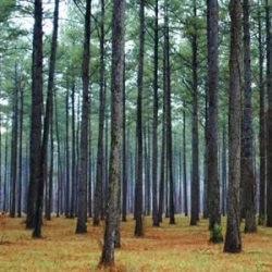 Forests need Foresters