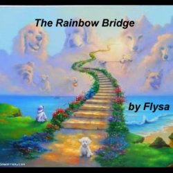 I remember when... furry friends went to the Rainbow Bridge