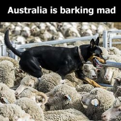 The drover's dog is in charge but who controls the drover's dog? We are barking mad