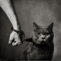 A Slave to my Cat - a slave to Love.
