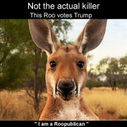 GIANT KILLER KANGAROO RAISES RIOT IN AUSSIE OUTBACK!