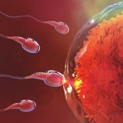 Men, it is time to defend your sperm.